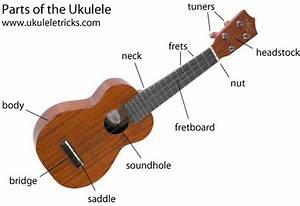 Ukulele Anatomy The Parts Of The Ukulele