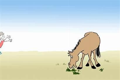 Horse Funny Cartoons Animations
