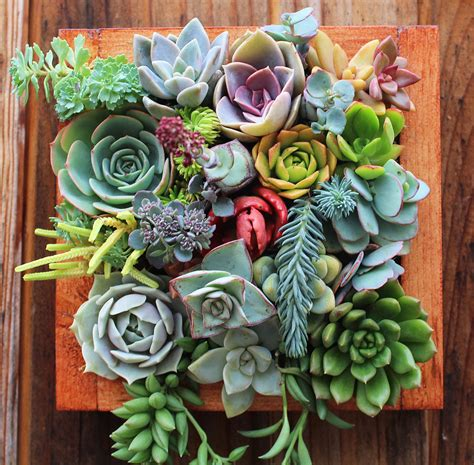 How To Plant A Vertical Succulent Garden by Succulent Vertical Succulent Garden Noveltystreet