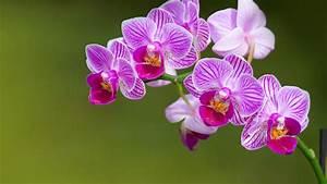 Schöne Orchideen Bilder : orchideen pflegen das sollten sie beim gie en d ngen und kaufen beachten ~ Orissabook.com Haus und Dekorationen