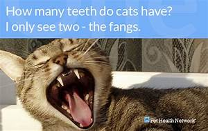 Dr  Ernie U0026 39 S Top 10 Cat Dental Questions    And His Answers