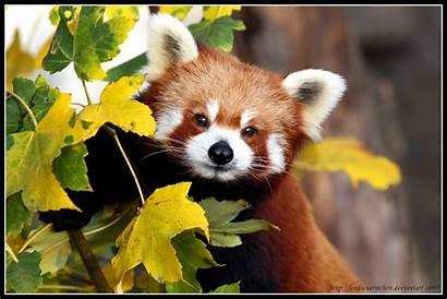 Panda Af Portrait Ii Deviantart Wallpapersafari Pocketowl