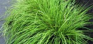 Plantes Grasses Extérieur : plante verte vivace exterieur pivoine etc ~ Dallasstarsshop.com Idées de Décoration