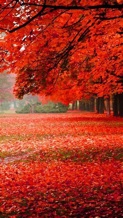 Iphone Autumn Nature Foliage Park Iphones Wallpapers