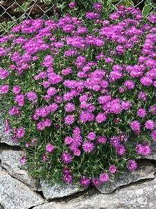 Pflanzen Für Trockene Schattige Standorte : balkonpflanzen fur sonnigen balkon ~ Michelbontemps.com Haus und Dekorationen