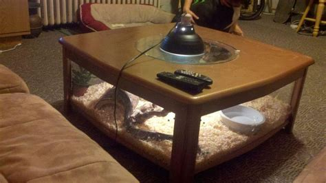 Matching your dragon to your enclosure. Homemade coffee table snake cage. Snake terrarium, reptile cage, cage table. Michael Briehler ...