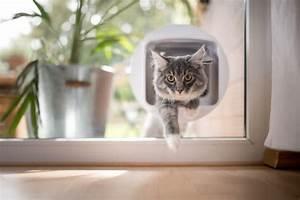Katzenklappe Für Fenster : katzenklappe f r glast r glasfenster einbau kosten ~ A.2002-acura-tl-radio.info Haus und Dekorationen