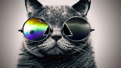 Galaxy Cat Wallpapers Hipster Cool Backgrounds Sunglasses