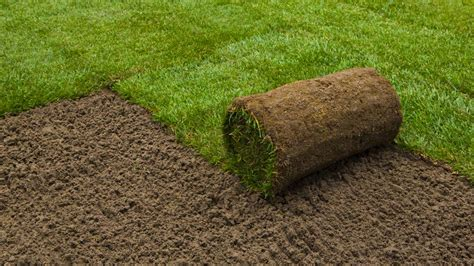 Restoring Your Lawn, Seed Vs Sod