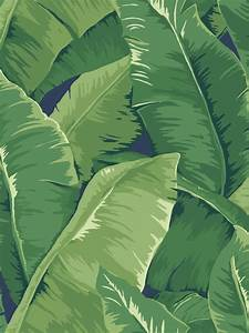 Leaf design wallpaper : Banana leaf wallpaper archives jaima company