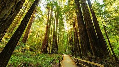Redwood Trees Through Wallpapers Road Nature Forest