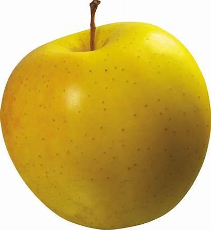Apple Yellow Transparent Clipart Apples Fruits Web