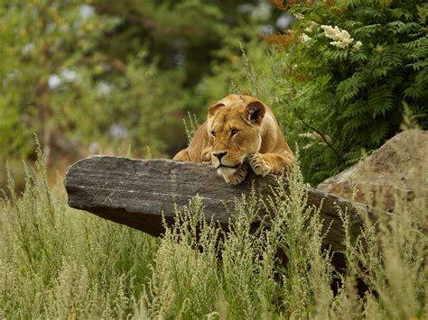 Wild Nature And Animals