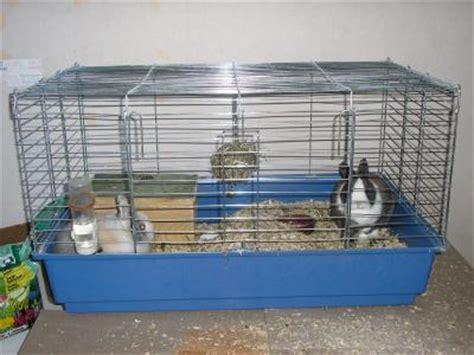 la maison dans la cagne une cage pour lapin nain tout ur le lapin nain