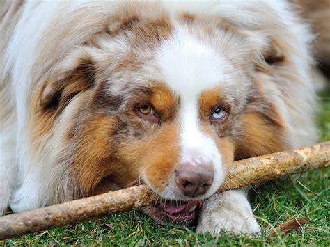 dog breeds    longest business insider