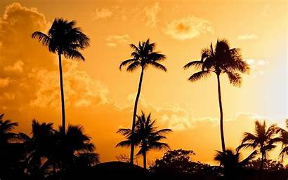 Palm Tree Wallpapers Sunset Desktop Resolution Iphone
