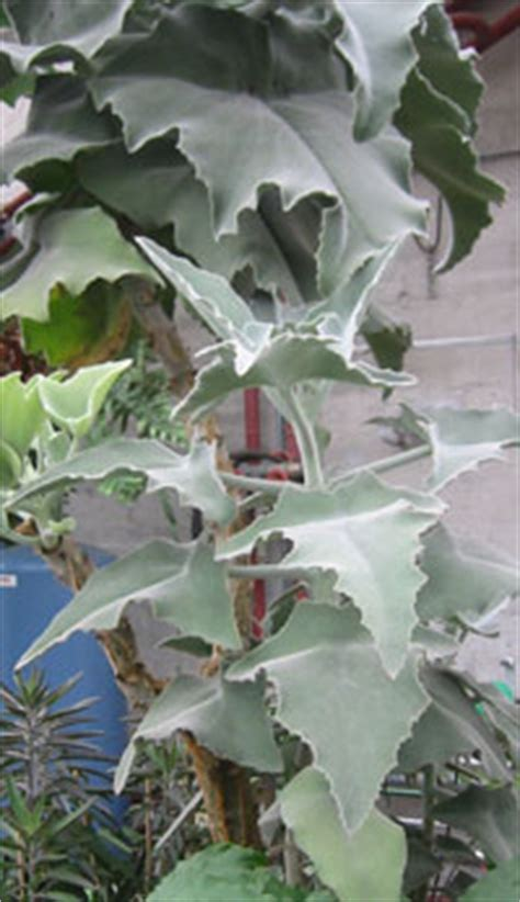neuere und wieder entdeckte zimmerpflanzen gartench