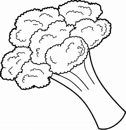 Coloring Vegetable Broccoli Pages Fruit Easy Printable
