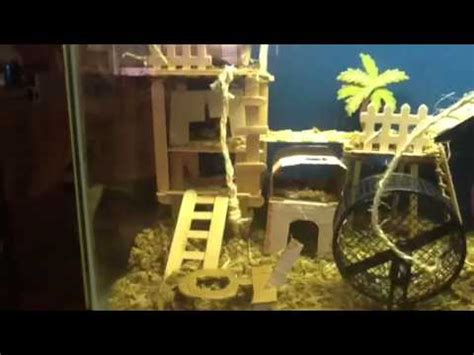 homemade mouse  hamster tank youtube