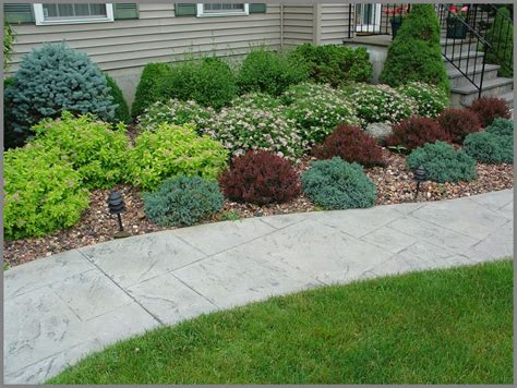 bush ideas for landscaping house foundation shrub plantings of barberry spirea blue spruce and boxwood make up this