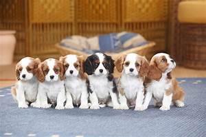 Mietwohnung Mit Hund : zu siebt in der wohnung wie viele hunde sind erlaubt n ~ Lizthompson.info Haus und Dekorationen