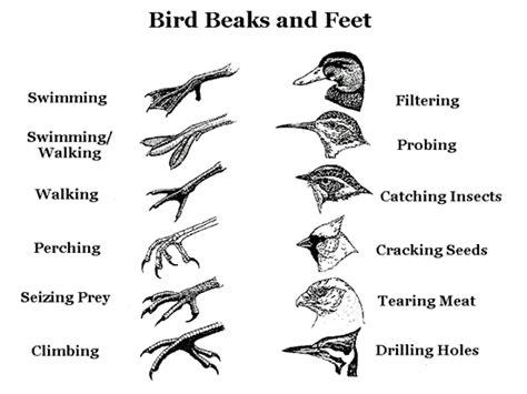 bird beaks  feet  images bird beaks bird