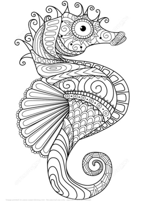 sea horse zentangle coloring page  printable