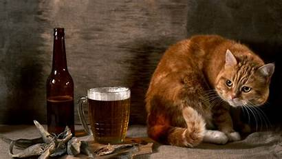 Funny Animal Desktop Wallpapers Animals Wallpapersafari