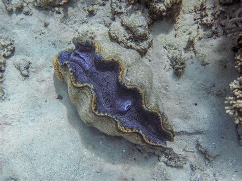 great barrier reef february  douglas stebila