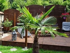 Palmier De Jardin : amenagement jardin avec palmier zj12 jornalagora ~ Nature-et-papiers.com Idées de Décoration