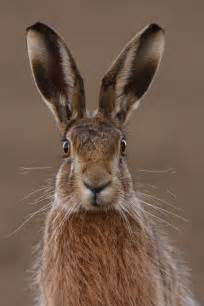 big eared hare  funny expression luvbat