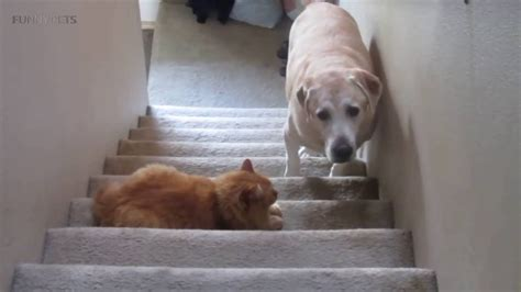 dogs funny cats afraid pets