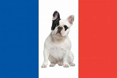 French Dog Breeds Dogs Animal Animalwised