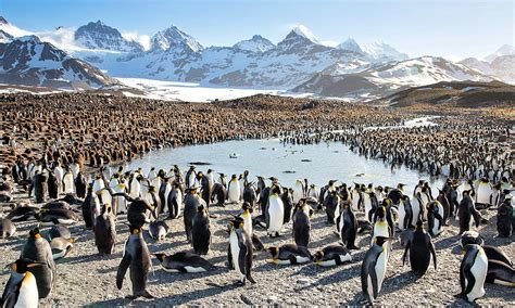 Penguins From Antarctica