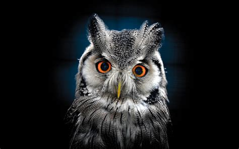 Black Owl Wallpapers by Owl Wallpaper Best Wallpaper Hd For Desktop Wallpapers13