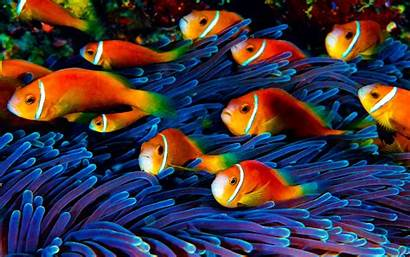 Underwater Fish Desktop Wallpapers Itl Wallpapers13 Backgrounds