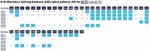 Alternative Splicing Diagram In The Transcripts Section