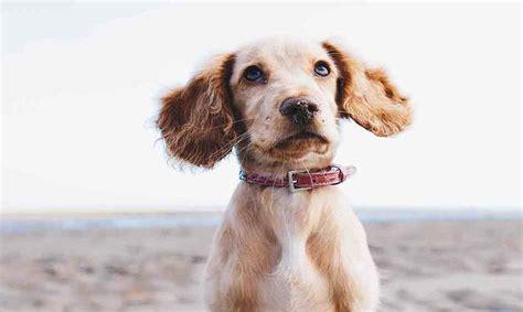 tierversicherung guenstige haftpflichtversicherungen im