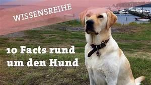 Schneckenkorn Giftig Für Hunde : 10 fakten ber hunde k nnen hunde farben sehen und ~ Lizthompson.info Haus und Dekorationen
