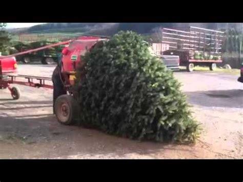 christmas tree bailer tree vs bailer
