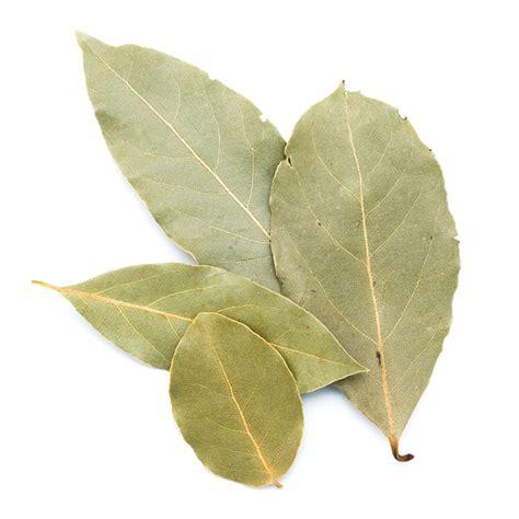 laurier de cuisine laurier en feuilles achat utilisation en cuisine vetus