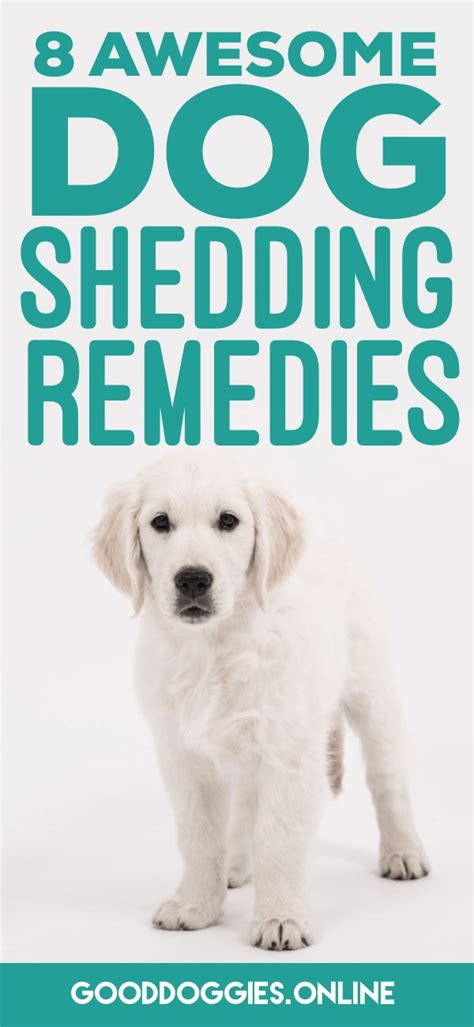 Home Remedies For Shedding Dogs by Best 25 Shedding Ideas Only On Itchy