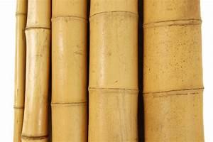"""3"""" x 8' Bamboo Poles Natural (5 Poles)"""
