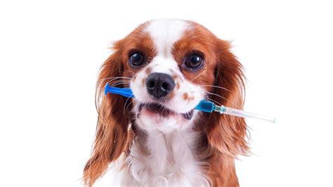 Impfung beim Hund: Pro und contra - Tiere suchen ein ...