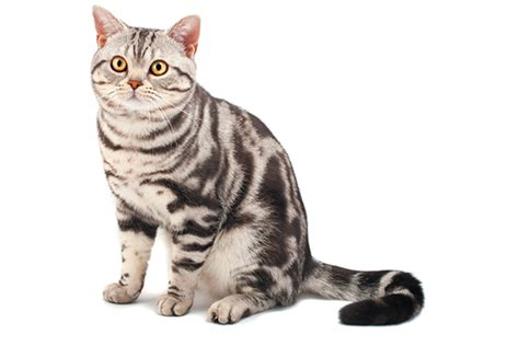The 5 Tabby Cat Patterns