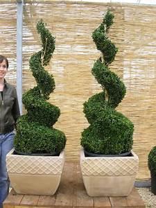 Buchsbaum Schneiden Formen : buchsbaum 39 spiralen 39 buchsbaum buxus immergr ne ~ A.2002-acura-tl-radio.info Haus und Dekorationen