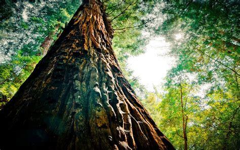 Pine Tree Forest Green Wallpaper Hd 2560x1600