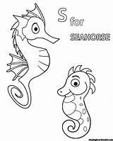 Seahorse Coloring Lovely Horse Sea Drawing Cartoon Coloringpagebase sketch template