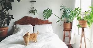 Pflanzen Im Schlafzimmer : pflanzen im schlafzimmer die 7 besten exemplare zum durchschlafen ~ Indierocktalk.com Haus und Dekorationen