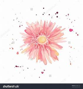Watercolor gerbera. Single flower with paint drops and ...